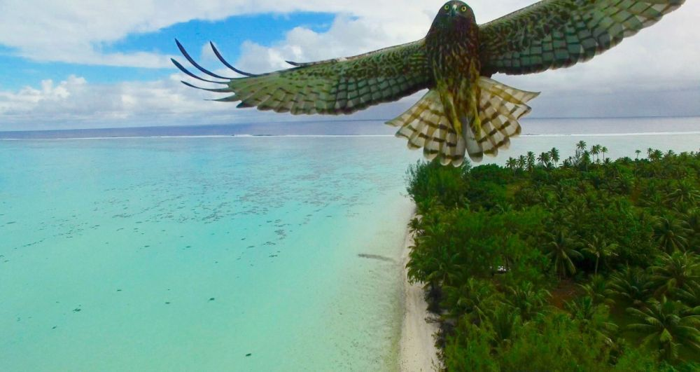 bird-attack-in-french-polynesia-by-actua-drone-768x4082x